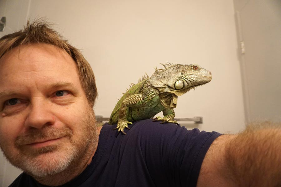 The author, Stephen, with Lily, one of his two green iguanas.